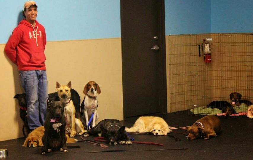 The Path To The Perfect Dog 5 Tips To Successfully Train Your Dog