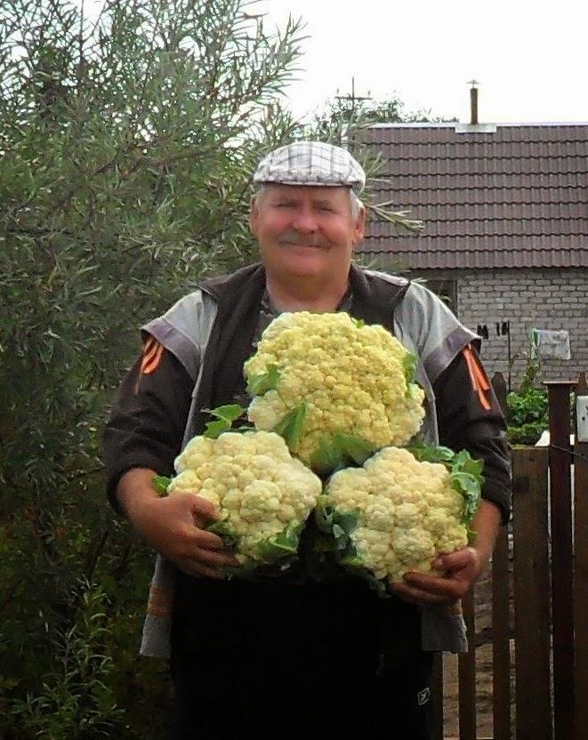 Люблю ж я цветную капустку!