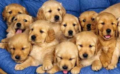 Soñar con Perros ¿Que significa?