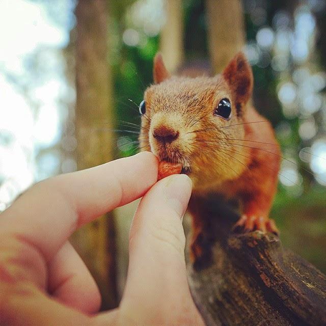 wildlife photography feeding animals konsta  punkka