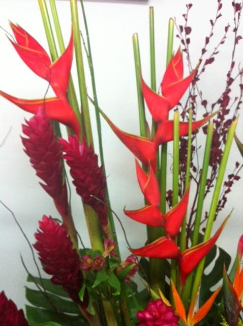 Molcajete digital flores tropicales for Plantas ornamentales tropicales