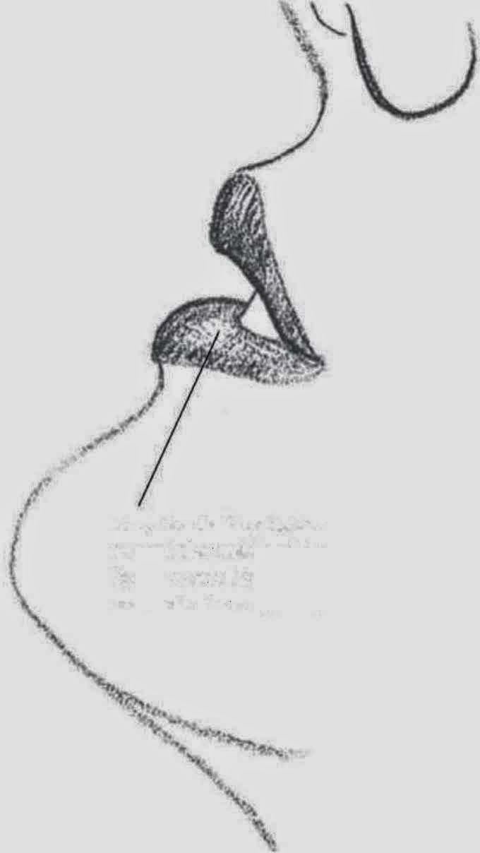Drawings WOMEN PROFILE