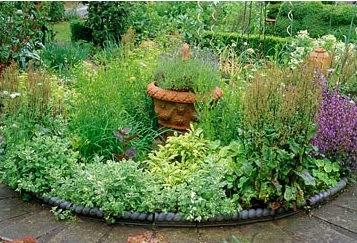 C mo crear un jard n de plantas arom ticas mundohumano - Jardin de aromaticas ...