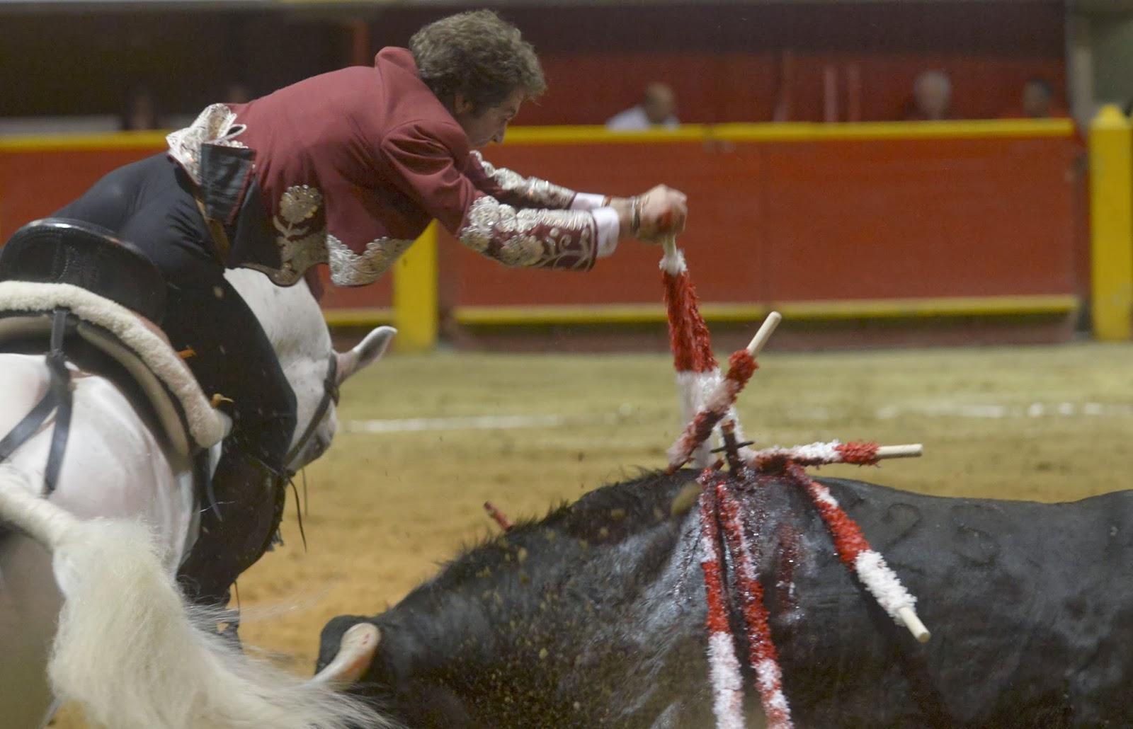 Spanish, Mounted, Spain, Bullfighting, Pablo Hermoso de Mendoza, Celebrate, Cut, Ears, La Macarena, Bullring, Medellin, Antioquia, Deparment, Colombia, Sports, Perform, Bull,
