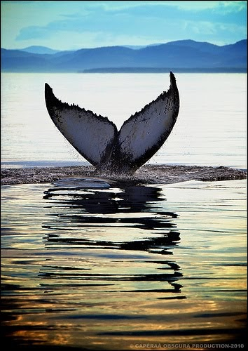Voyages bergeron les baleines sont de retour en for Taille des abricotiers bergeron