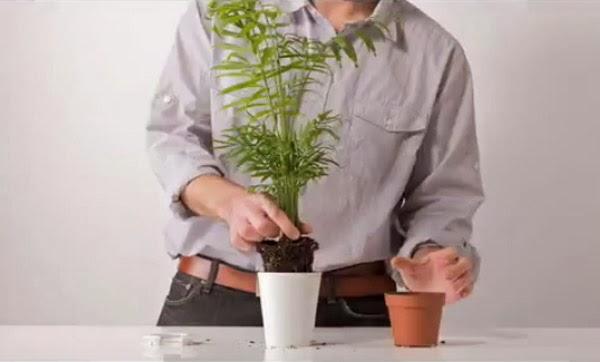 jak dbać o rośliny, pielęgnacja roślin,domowe rośliny,hodowla roślin,sadzonki,