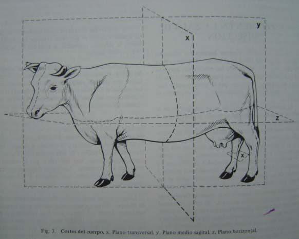 Anatomia I: Planos Topograficos
