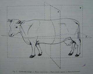 Anatomia I Planos Topograficos