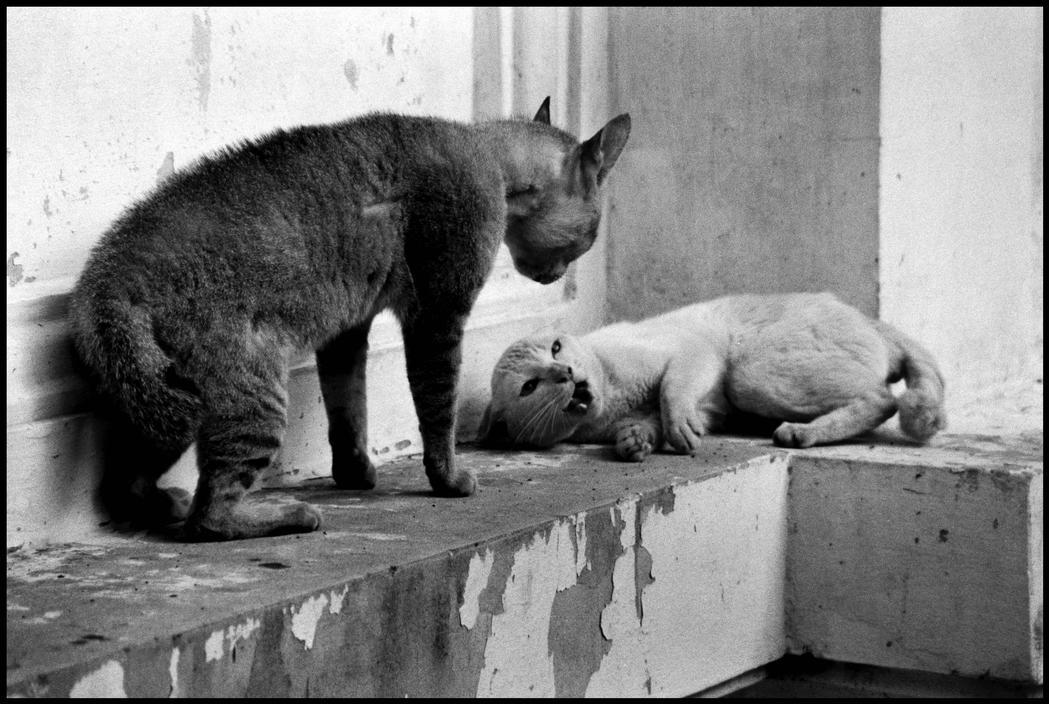 the cat ladies   u00a9 elliott erwitt