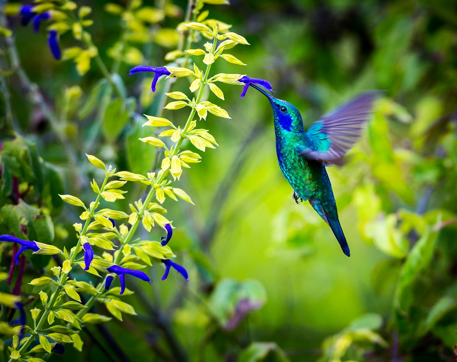 Hummingbirds Are Beautiful, Exotic Creatures That Enhance Gardens. They  Also Play A Vital Role In Supporting Native Plant Life By Acting As  Pollinators.