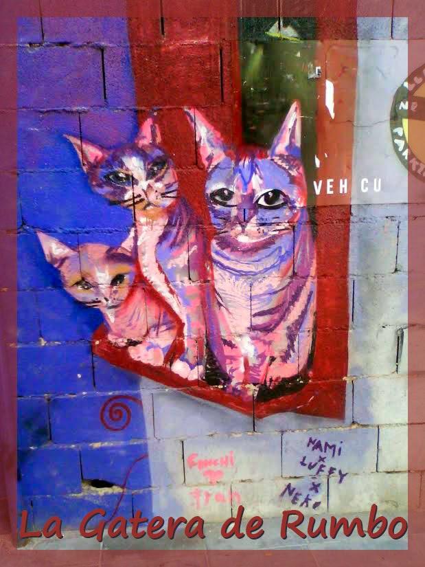 Pintada gatos Cartagena