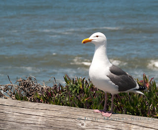 A seagull sitting on a log.