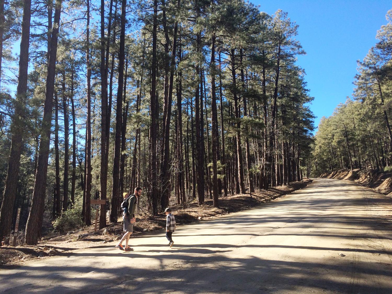 Sometimes Sweet Explore Arizona Prescott Hiking Aspen