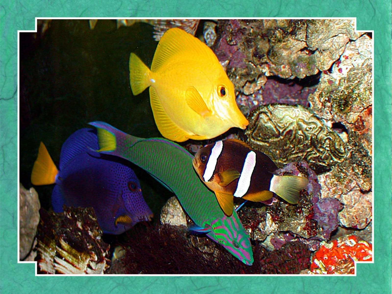 Free wallpaper download tropical fish wallpaper pictures for Exotic tropical fish
