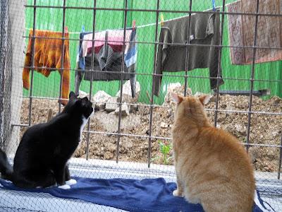 Koty na oknie