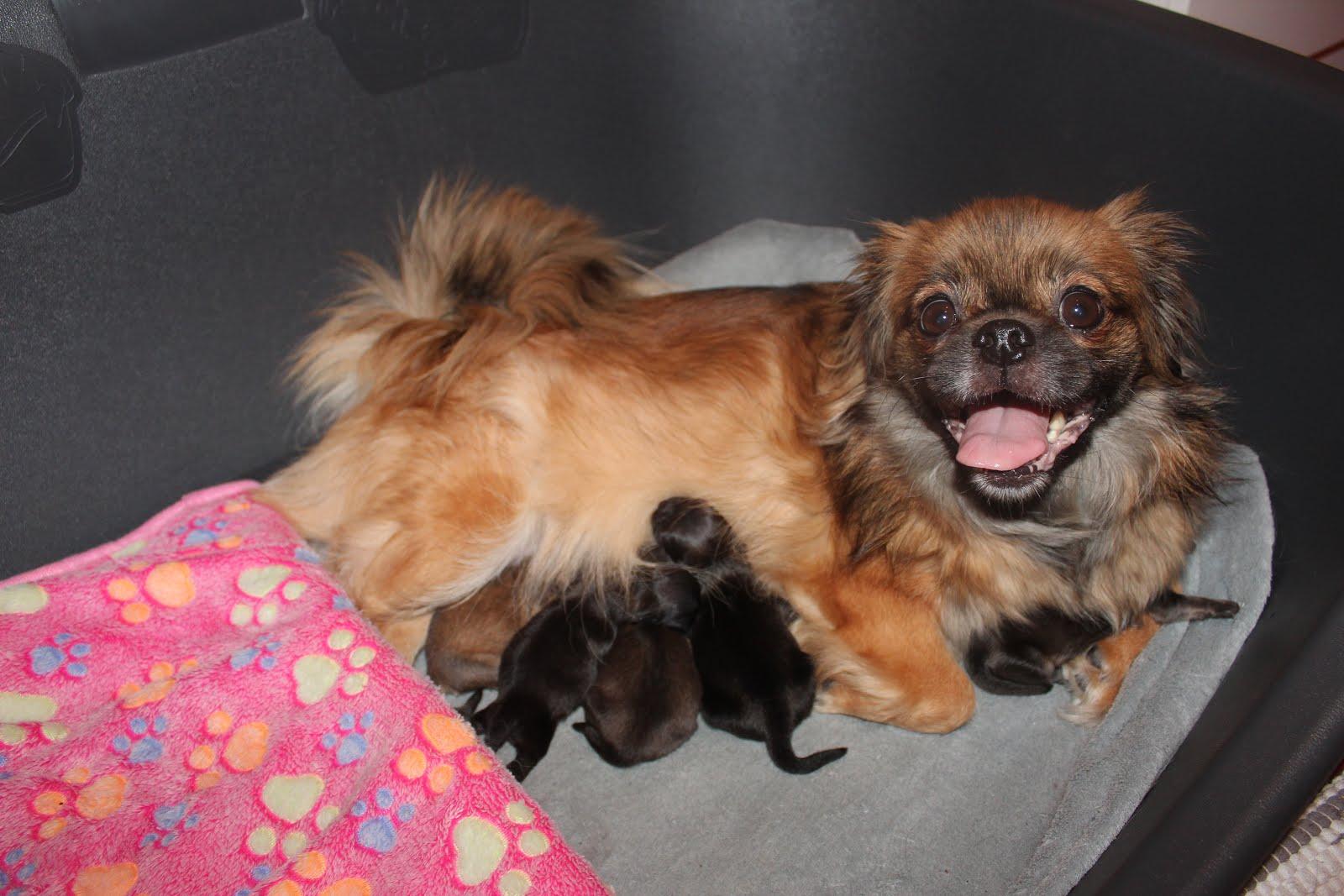 Laleh og Lenny er satt sammen igjen. Født 28.januar 18. Fine små 2 jenter og 3 gutter.