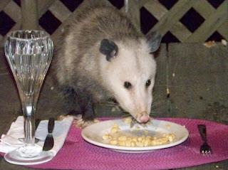 Opossum Can It Hurt A Dog