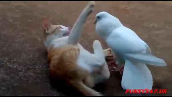 Kucing Untuk Menghalau Burung Merpati