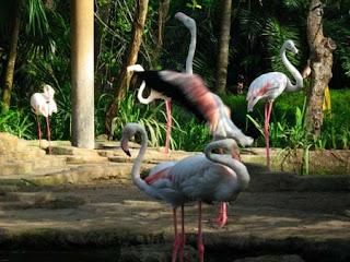 Bird Park atau Taman Burung di pulau Bali