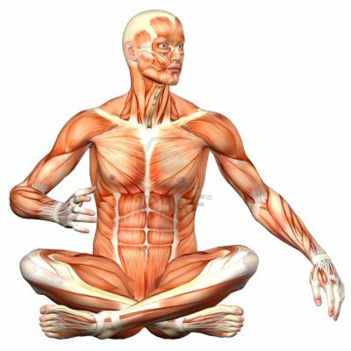 anatomía: ANATOMÍA HUMANA