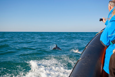 Spot dolphins, seals and puffins on Wavehunters boat tours