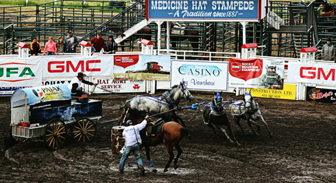 chuckwagons medicine hat alberta photography