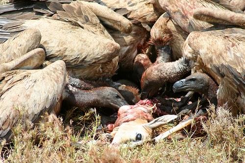 Anggadi Trashbag Burung Bangkai
