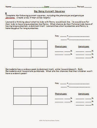 savvy secondary science big bang theory punnett square worksheet. Black Bedroom Furniture Sets. Home Design Ideas