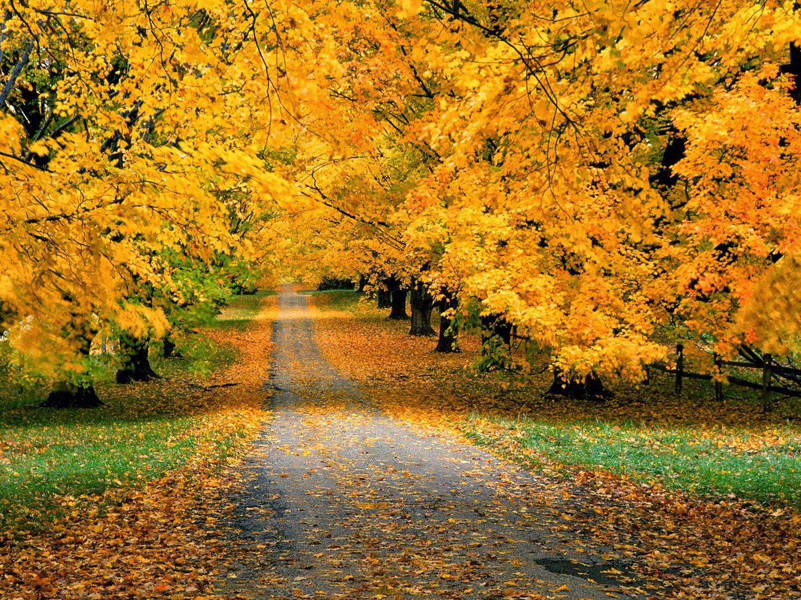 Картинки для первоклашек природа осенью