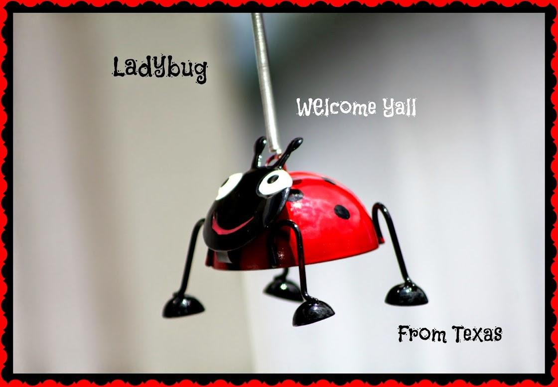 Ladybug from Texas