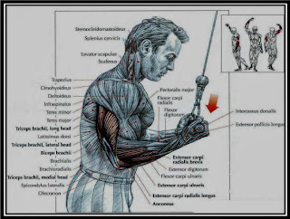 Reverse Triceps Pushdowns