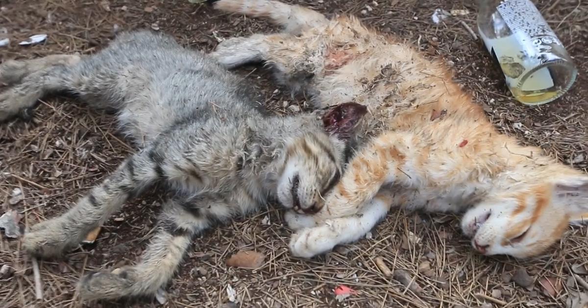 Terminen con la masacre de animales en Sueca