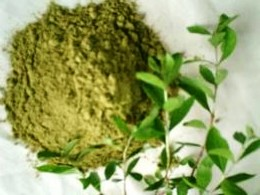 The Healing HErb of India-Lawsonia inermis (Mehandi)
