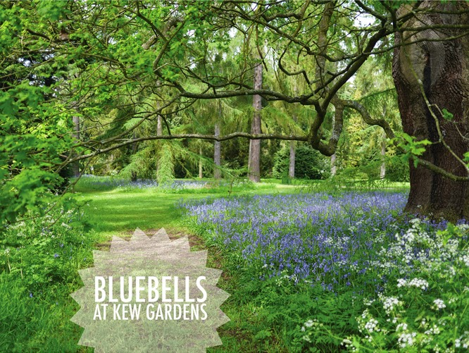 Bluebells at Kew Gardens, London by Alexis at www.somethingimade.co.uk