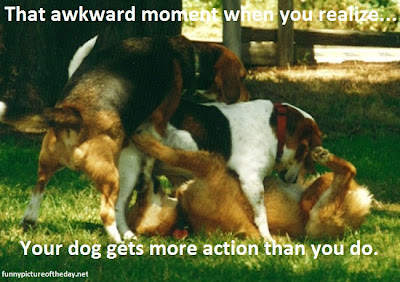 That Awkward Moment Funny Dogs 69 Doggy Style