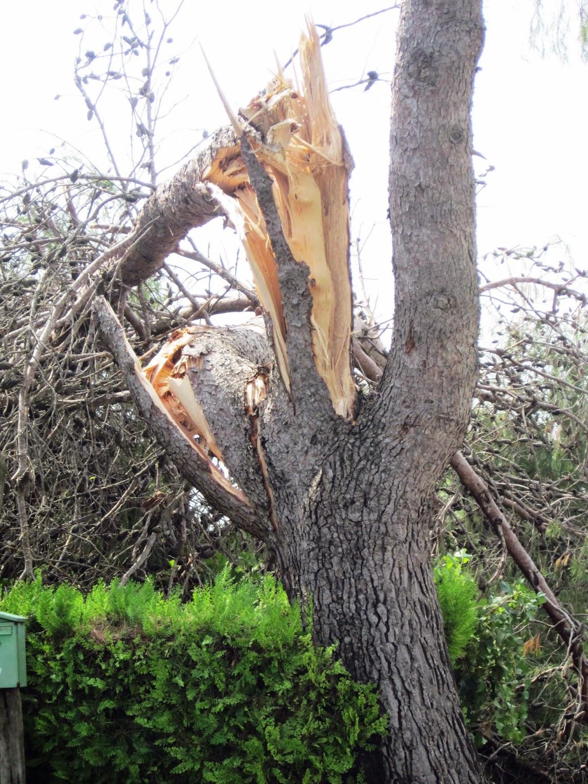 árbol huracán