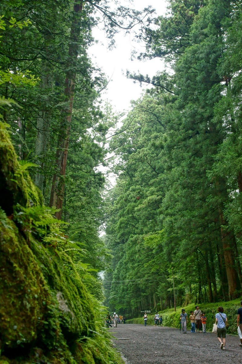 The longest tree-lined avenue in the world | Cedar Avenue of Nikko, Japan