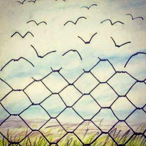 Disegno che mostra una rete che diventa uccelli che volano via con sullo sfondo un prato e il cielo