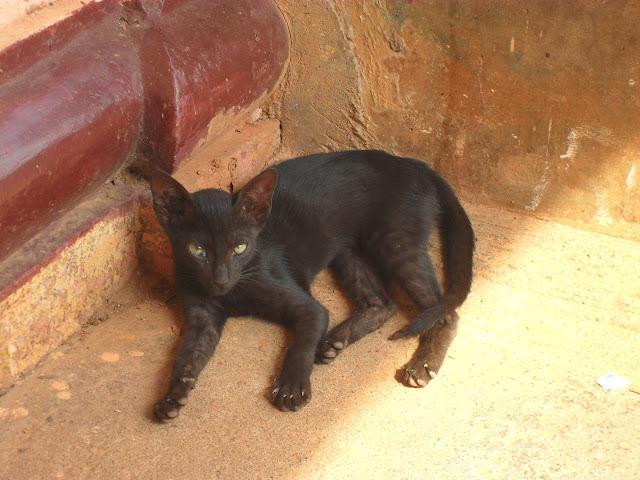 черная недовольная кошка