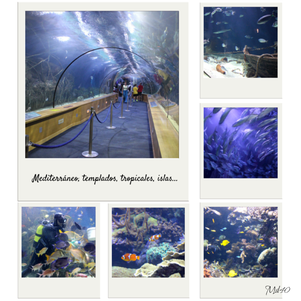 El Oceanografic una gran visita