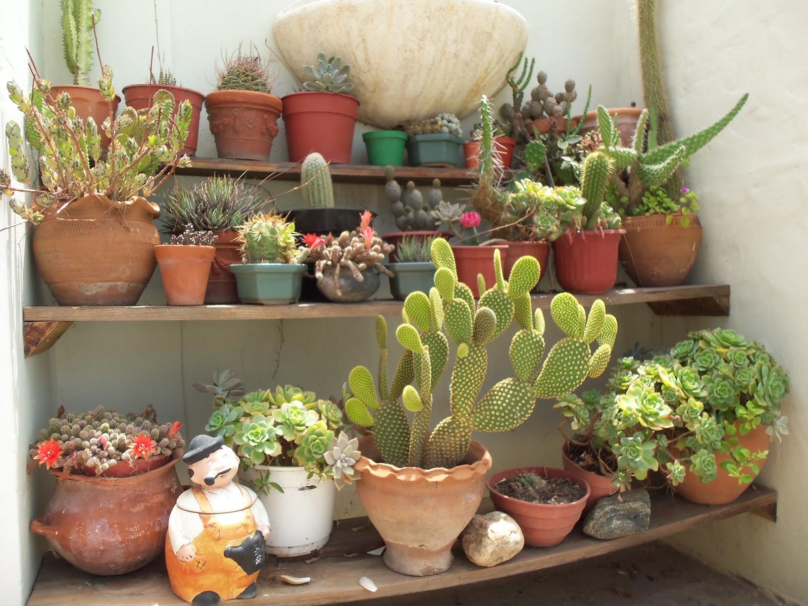 Mi jard n feliz cactus y suculentas for Cactus y suculentas