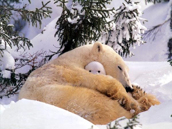 Bienvenidos al nuevo foro de apoyo a Noe #250 / 28.04.15 ~ 30.04.15 - Página 3 Paisaje+con+animal+oso