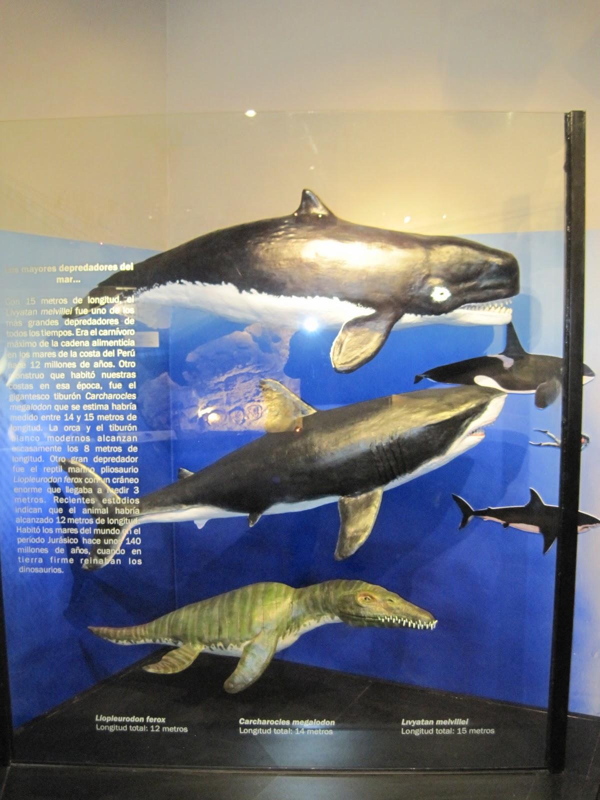 Livyatan Whale Related Keywords - Livyatan Whale Long Tail ...