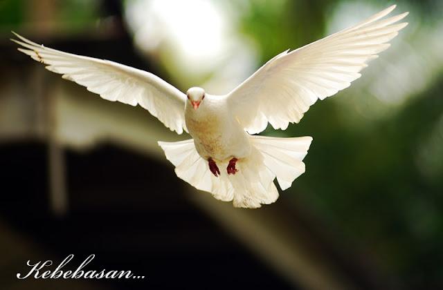 http://1.bp.blogspot.com/-_yd014hqqLw/UAKxu9CJvVI/AAAAAAAAAKo/fUS2hhnTwZk/s1600/merpati.jpg