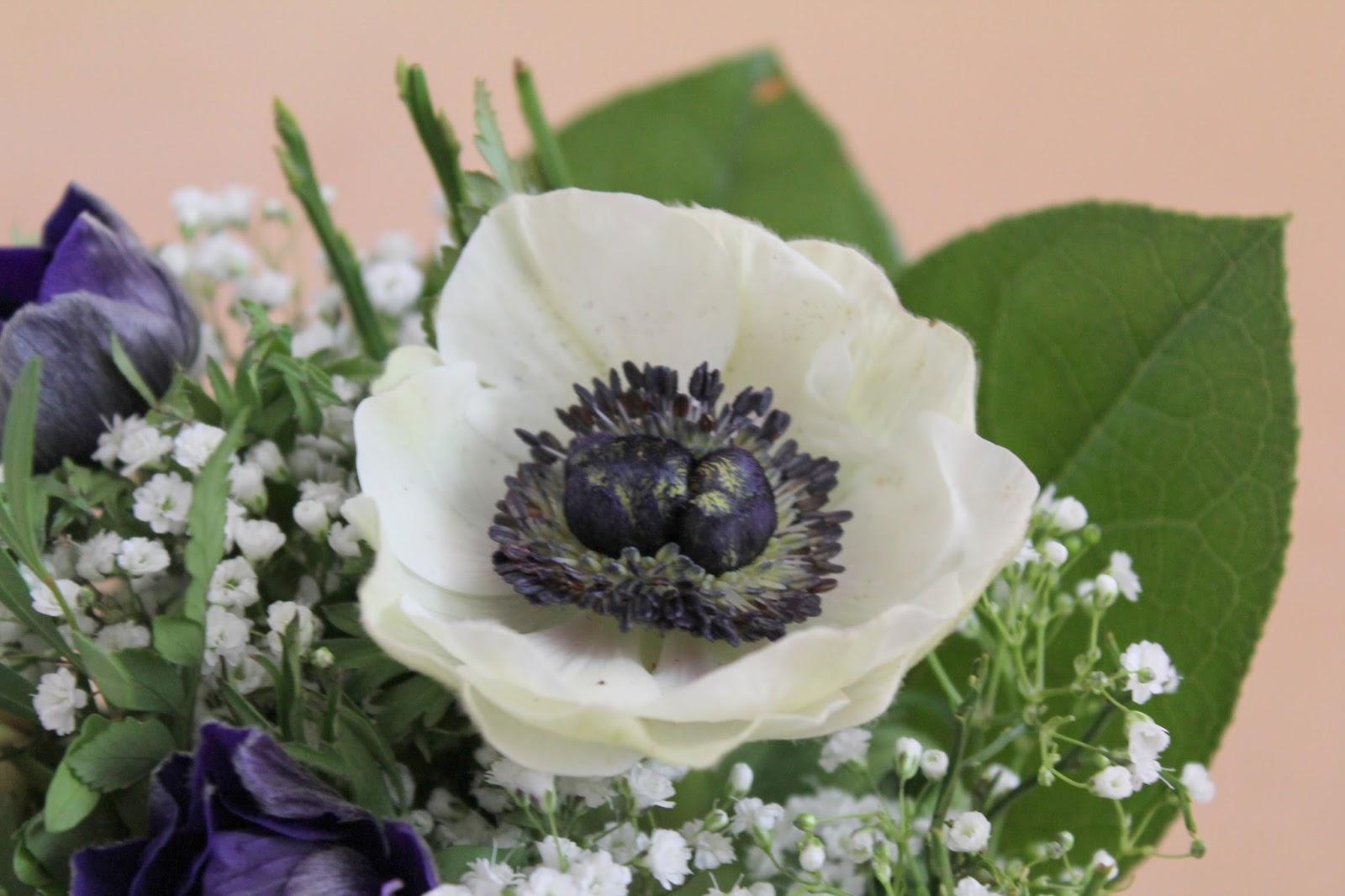 white anemone spring