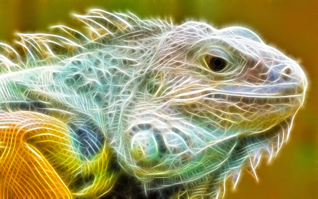 12347-Iguana Light Animal HD Wallpaperz