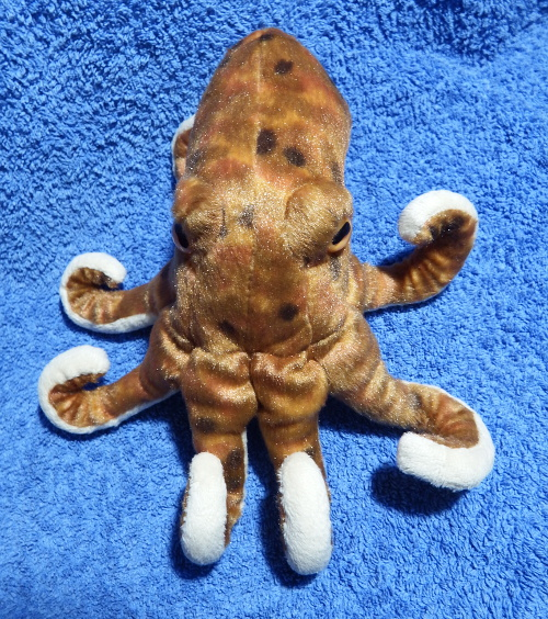 Cuddly octopus from the top