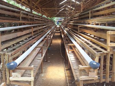 Berbagai macam cara ternak Ayam: model kandang ayam petelur