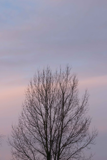 sky with bare tree