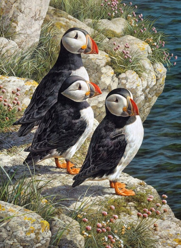 imagenes-de-cuadros-de-aves-salvajes
